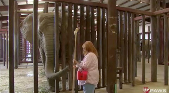Protected Contact Elephant Training with Gail Laule