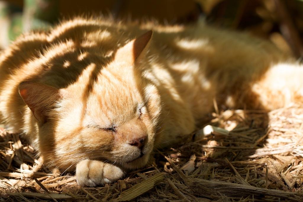 Florida Tomcat