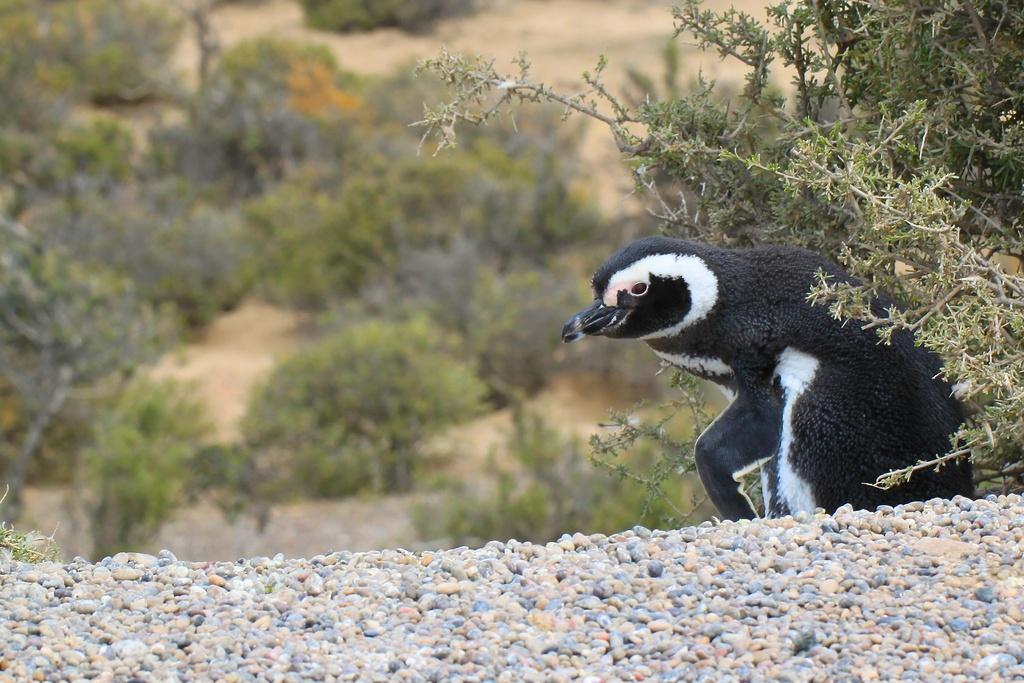 Penguin on Guard