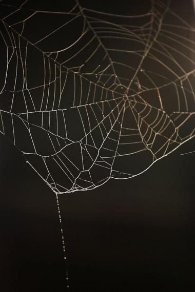 cobweb, taman nagara, 2008