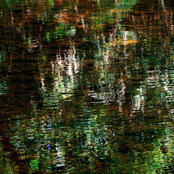 water reflection, taman negara, 2008
