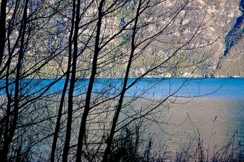 lake view, dunedin, new zealand, 2010