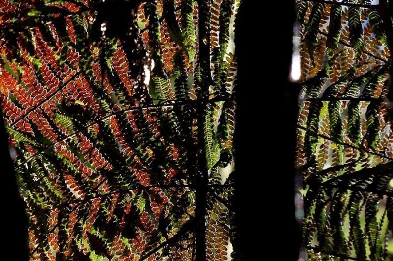 leaves outside waitomo caves, new zealand, 2010