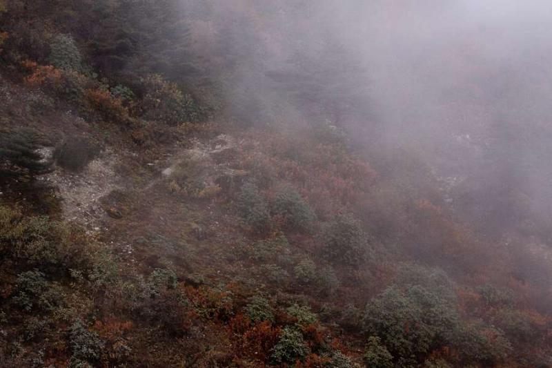 misty foliage, arunachal, 2010