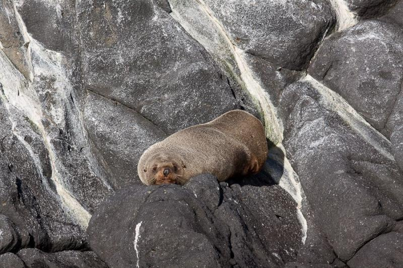 seal resting, otago, new zealand, 2010