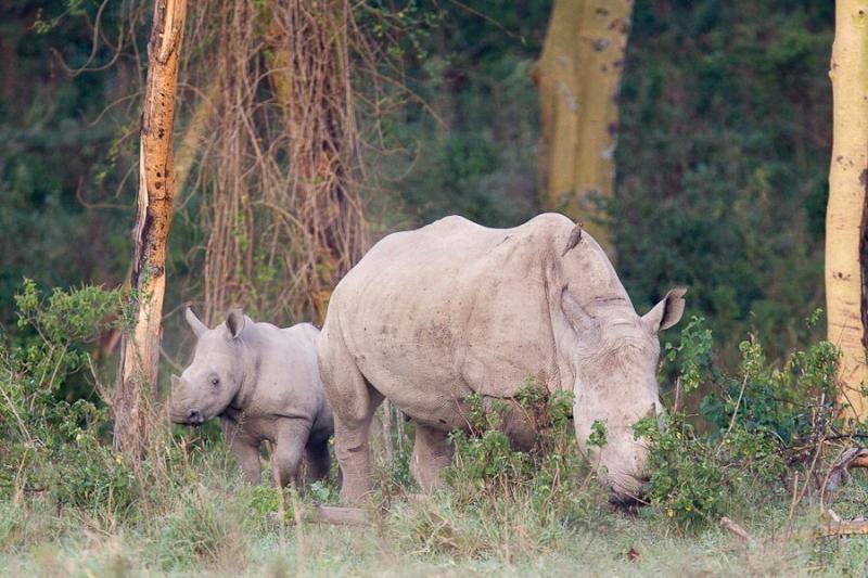white rhino, lake nakru, kenya, 2009