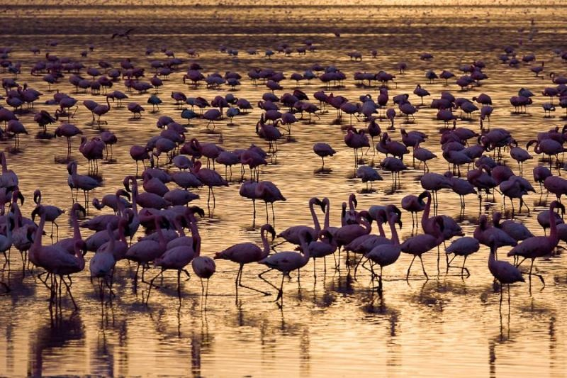 flamingoes at sunset, lake nakru, kenya, 2009