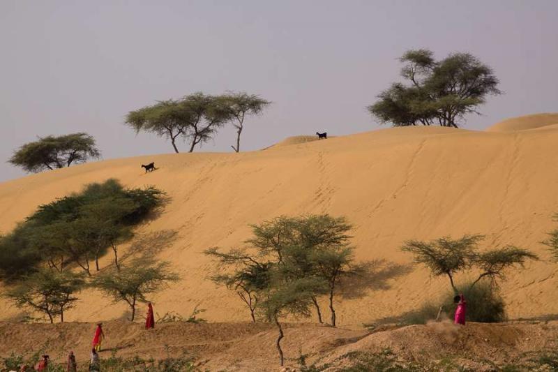 desert view, pokhran, 2010