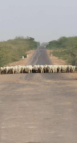 road block, rajasthan, 2010