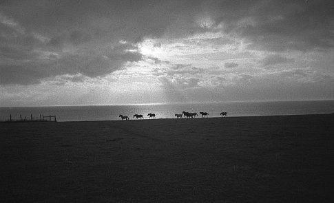 Cape Wolfe, P.E.I. 2003