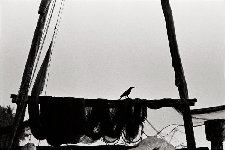 Fisherman's Crow, Kerala 2008   Edition 4 of 5