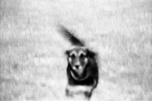 Stray Dog, New Delhi 2004   Edition 2 of 3