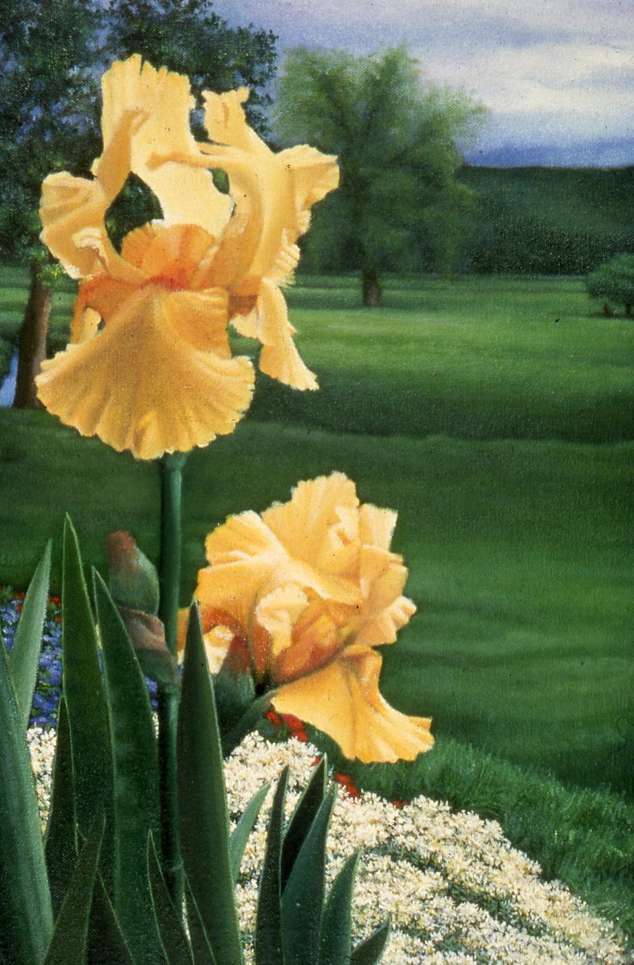 The Yellow Iris