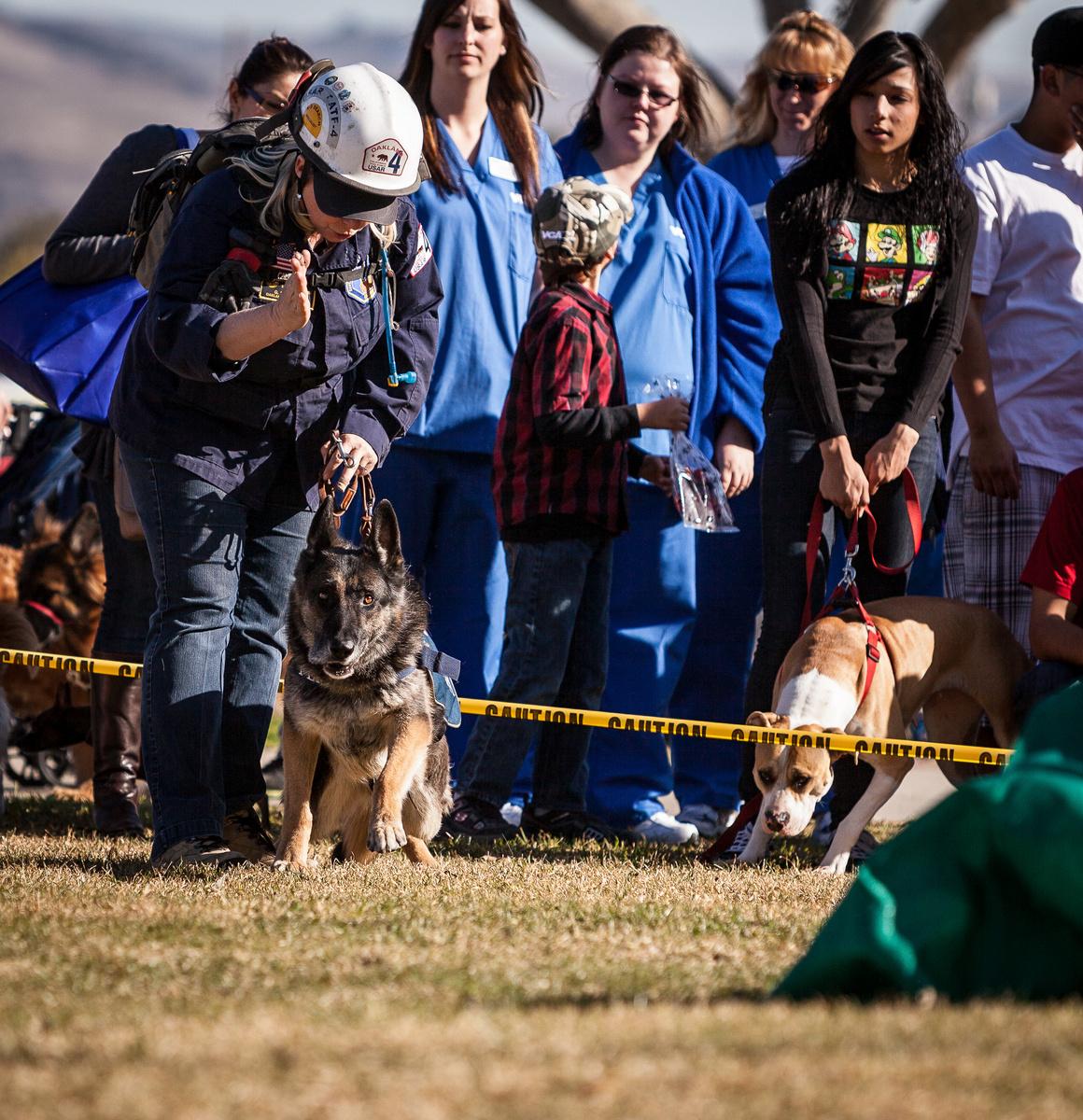 FEMA Search and Rescue Dogs