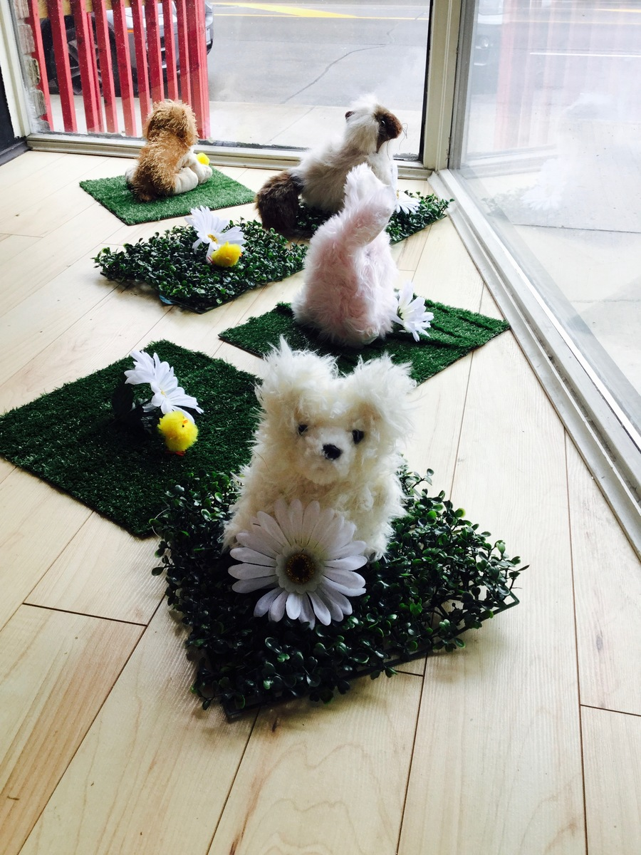 PUPPIES & BUNNIES FOR SPRING 2017 WITH LOVE