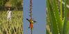 Aloe vera farms, Jaisalmer