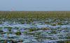 Coral reefs , Mithapur, Gujarat