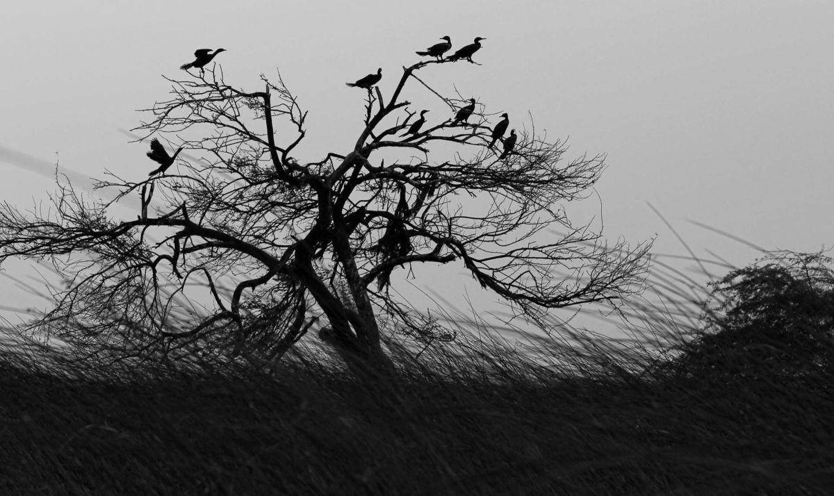 Nalsarovar Bird sanctuary - Ahmedabad