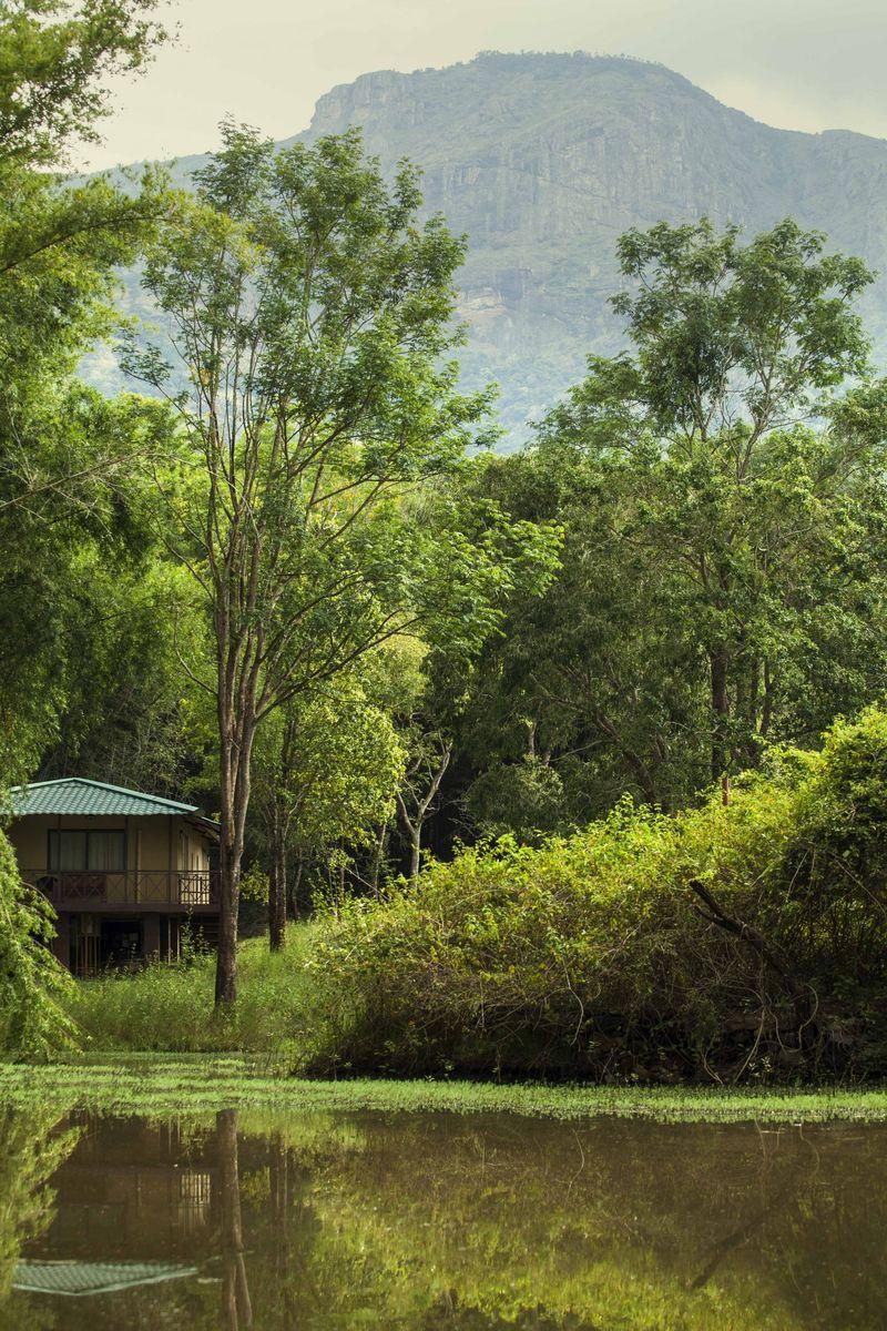 Jungle Hut, Masinagudi