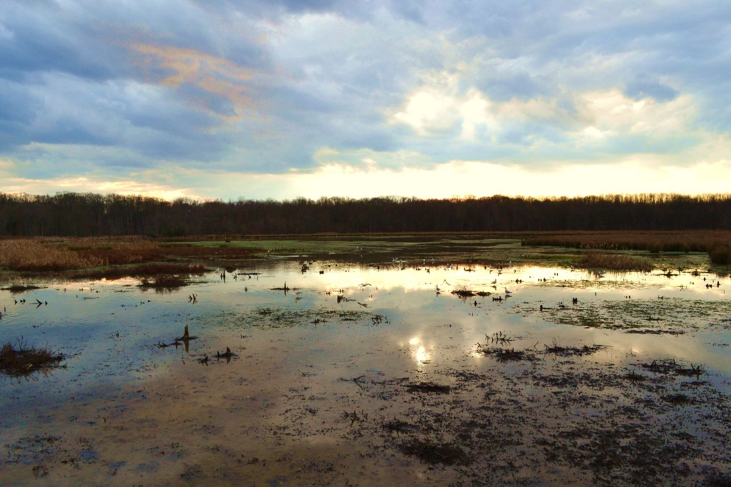 nature emits glorious colours over wetland preserves