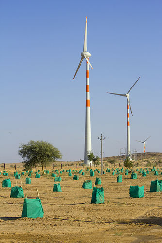 Dates farm, Jaisalmer