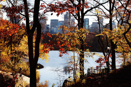 Central park in automn