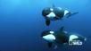 Nat Geo Wild - Kingdom of the Oceans